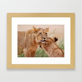 Two young lions - Africa wildlife Framed Art Print