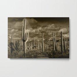 Sepia Toned Photograph of Saguaro Cactuses Metal Print