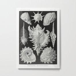 Prosobranchia-Dorderkiemen Schnecken from Kunstformen der Natur (1904) by Ernst Haeckel Metal Print
