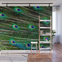 Peacock Feathered Wall Mural