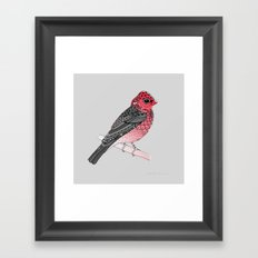 Scarlet Rosefinch Framed Art Print