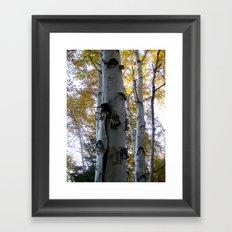 northern ontario birch part 3 Framed Art Print