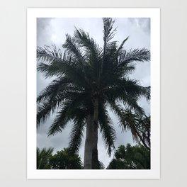 Messico palme Kunstdrucke
