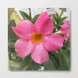 Raindrops on a pink flower Metal Print