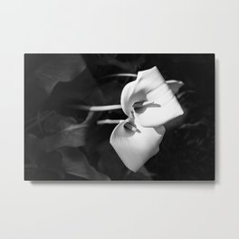 Giant White Calla Lily Metal Print