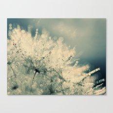 dandelion IX Canvas Print