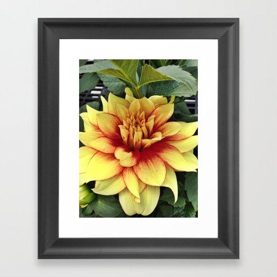 Flower of Hope Framed Art Print