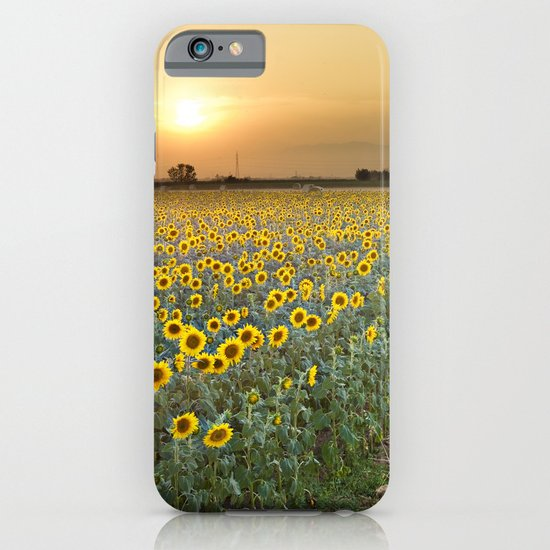 Sunflower field iPhone & iPod Case