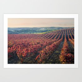 Autumnal vineyards in the Alentejo, Portugal Art Print