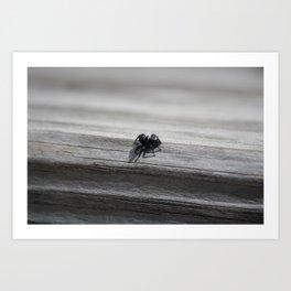 itsy bitsy spider. Art Print