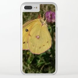 Sulphur Butterfly on Red Clover Clear iPhone Case