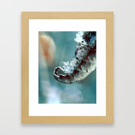 Sweet Clarity  Framed Art Print