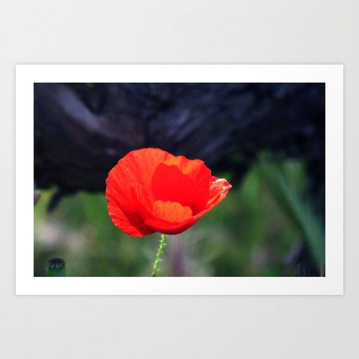 Poppy flower art print by annaki society6 poppy flower art print mightylinksfo