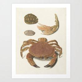 Vintage Crab Illustration Art Print