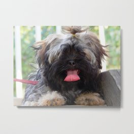 Puppy playdate Metal Print