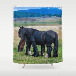 Gypsy Vanner Horses 0258 - Colorado Shower Curtain