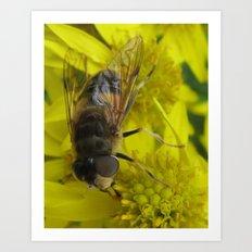 Wellow wasp Art Print
