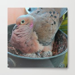 Baby Bird Peeking out at the World Metal Print