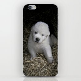 Great Pyrenees Puppy iPhone Skin