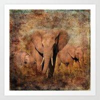 Elephants Family Portrait Art Print