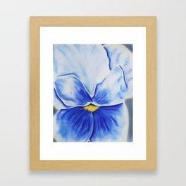 Pansy Blues Framed Art Print