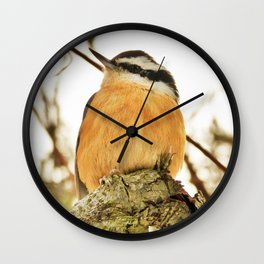 Curious Nuthatch Wall Clock