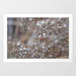 Winter in the Gardens Art Print