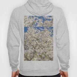white flowers of Cerasus Hoody