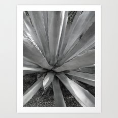 Agave Cactus, warm day, Art Print