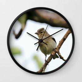 Young Chaffinch Songbird Bird Perching on a Branch - Wales, UK Wall Clock