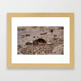 Shell on the beach Framed Art Print