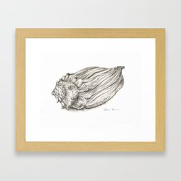 Seashell Framed Art Print