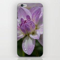 Porcelain Dahlia iPhone Skin