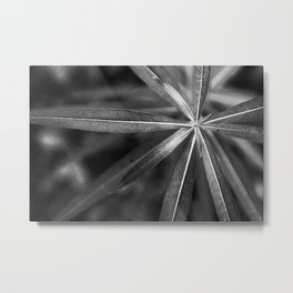 Black and white plant Metal Print