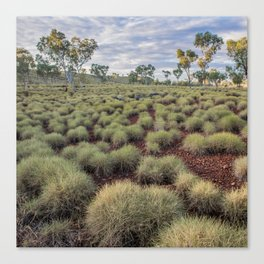 Spinifex Canvas Print