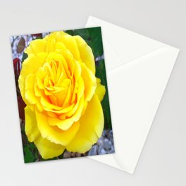 Golden Yellow Rose with Garden Background Stationery Cards