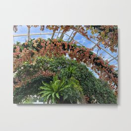 orchids in the greenhouse Metal Print