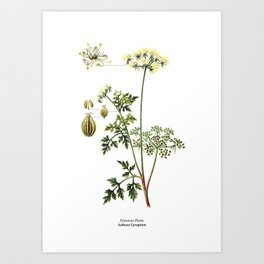 Poison Parsley botanical vintage illustration print Art Print