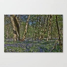 Bluebells in the woods Canvas Print