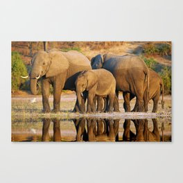 Elephants at a river, Africa wildlife Canvas Print