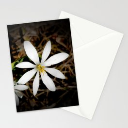 Bloodroot Blossoms 3 Stationery Cards