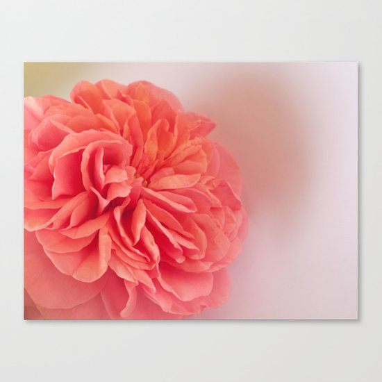 A Touch of Love - Pink Rose #2 #art #society6 Canvas Print