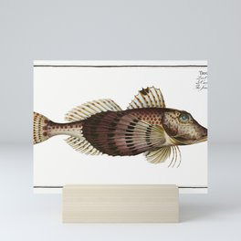 River-Salmon (Salmo Hucho) from Ichtylogie ou Histoire naturelle generale et particuliere des poisso Mini Art Print