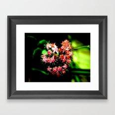 Cacti (Cactaceae) Framed Art Print