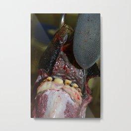 Bi-Product of the Meat Industry Metal Print