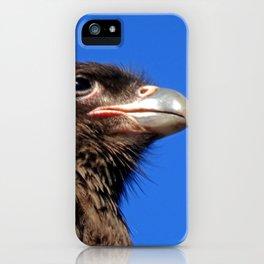 Striated Caracara iPhone Case