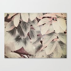 Touches of Pink Canvas Print