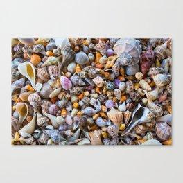 Seashell Collection Canvas Print