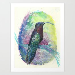 Purple-throated Carib Hummingbird Art Print