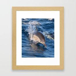 Dolphin Coming Full Steam Ahead Framed Art Print